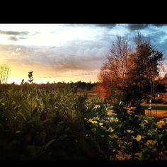 Backyard view:). Pin#3