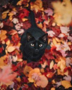 Animals And Pets, Baby Animals, Cute Animals, Animals Images, Safari Animals, Wild Animals, Crazy Cat Lady, Crazy Cats, Beautiful Cats