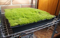 A tub, some moss, a wonderful canvas for imaginative play!