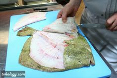 The European plaice (flatfish)