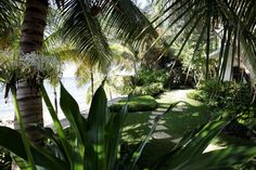 Cayman Islands, Outdoor Furniture, Outdoor Decor, Hammock, Plant Leaves, Nursery, Plants, Projects, Home Decor