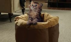 """Beatrice Home Fashions CNPPTB18GLD Catnap Round Pet Bed , 18"""", Chocolate/Gold * Read more at the image link."""