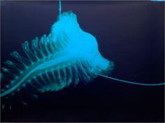 Deep Ocean Life | creepy deep sea. - Sea Life Photo (13488726) - Fanpop fanclubs