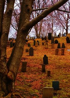 Burial Hill Plymouth, MA The tombstones were so old it was amazing to read some of them. It is a hike up a hill but worth it. Also went to a halloween tour through here at dark.