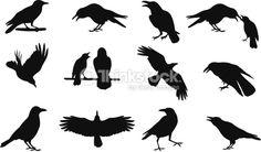 Vector Art : Raven vector