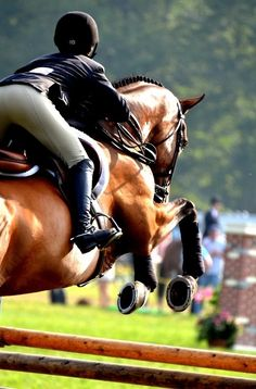 Equestrian Life and Style / .