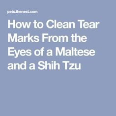 How to Clean Tear Marks From the Eyes of a Maltese and a Shih Tzu