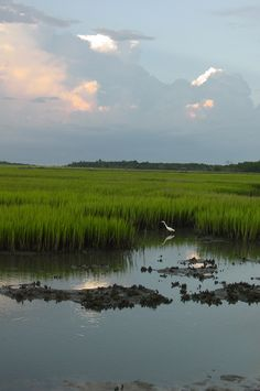 """""""Low Country Marsh Scene"""" was taken in a favorite place to photograph the natural beauty of the low country of South Carolina!"""