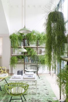 a proper urban jungle! green plants on bookshelves.