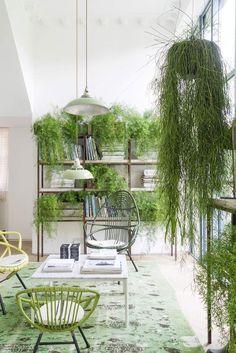 a proper urban jungle! green plants on bookshelves.
