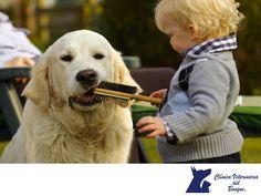 CLÍNICA VETERINARIA DEL BOSQUE. ¿Qué es la Terapia asistida con animales de compañía? Es una terapia donde se utiliza al animal como instrumento terapéutico. El primer contacto es el saludo. Interaccionan más entre ellos cuando hay un perro delante, el cual afecta al estado de ánimo de los pacientes humanos que requieren soporte emocional. Con el acariciado interaccionan con el medio, trabajan manipulación, destrezas finas, comunicación con otras personas y comunicación con el animal…