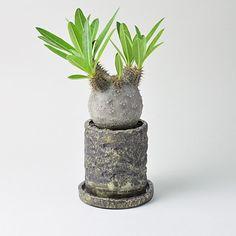 * . プラントラバーのみなさま、夜分遅くにすいません。 . 売り切れていました人気のハンドメイドポット、Arc Clay Barrel Potの全サイズとArc Kubrick Vaseが入荷いたしました。 . 明日の9/15(火) 21時頃Webストアにアップいたします。 . Arcシリーズのポットは冬型植物にとても似合いますので気になる方はお買い逃しのないようによろしくお願いいたします。 . #toky_item #toky_day #Arc_pot