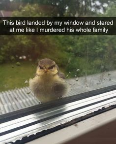24 Animals Humor memes - Funny Animal Quotes - - 24 Animals Humor memes Life Quotes & Humor The post 24 Animals Humor memes appeared first on Gag Dad. Humor Animal, Funny Animal Memes, Cute Funny Animals, Funny Animal Pictures, Funny Cute, The Funny, Funny Pics, Funniest Animals, Funny Images