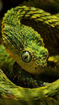 This snakes scales look like tiny trees all overlapping to create a jagged texture.