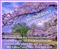 Top 23 happy Wednesday Quotes – SO LIFE QUOTES There are 365 days in a year and 7 days in a week. Some days have individual importance while some are important nationwide. Wednesday Morning Quotes, Wednesday Hump Day, Wednesday Greetings, Blessed Wednesday, Good Morning Friends Quotes, Morning Sayings, Psalms Quotes, Faith Quotes, Life Quotes