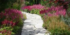 Perennials are kind of plants that live for years and mostly grow little buds that bloom into roses of different colors. Perennials grow through different