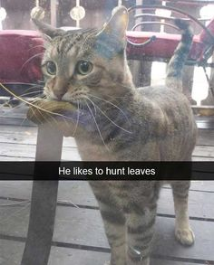 He Likes To Hunt Leaves