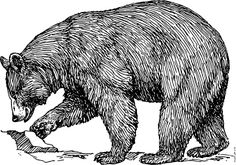 Black Bear clip art open source, free