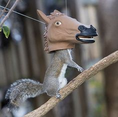 Squirrels are said to be one of the ten smartest animals. They are clever, at times deceptive, and are known occasionally for their thievery. Researchers have shown that squirrels are skilled at interpreting the intentions of others, and they use this skill to their advantage. They even create 3D maps in their minds as to …