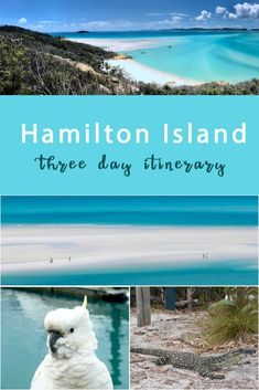 3 Day Itinerary For Hamilton Island, Tropical Queensland. - Journey of a Nomadic Family The Whitsundays, Hamilton Island, Island Map, Airlie Beach, Sheer Beauty, Sandy Beaches, Beach Club, Adventure Travel, Tropical