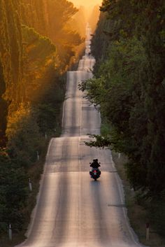 The boulevard with its ups and downs at sunset along the tall cypress trees in Bolgheri, Tuscany, Italy. Photo by Roberto Nencini