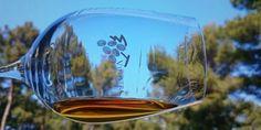 Die 12 besten Weine aus Kroatien für Einsteiger und Fortgeschrittene - In Istrien