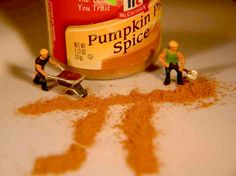 Pumpkin pie spice is made up of every spice that loves pumpkin pie.
