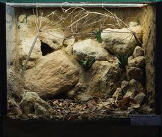 Картинки по запросу террариум для древесных пауков