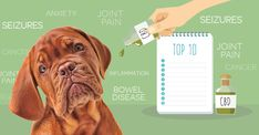 CBD Oil For Dogs: What You Might Not Know  The results seem to be in … researchers are turning their attention to this herb and, so far, they're finding there's lots to like. And just as CBD has helped humans, your dog can reap the same health-boosting (and even life-saving) benefits.