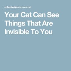 Your Cat Can See Things That Are Invisible To You