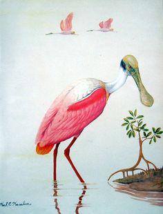 Roseate Spoonbill American Flamingo  1984 by mysunshinevintage