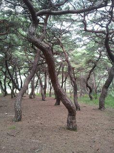소나무 숲에서 힐링을...