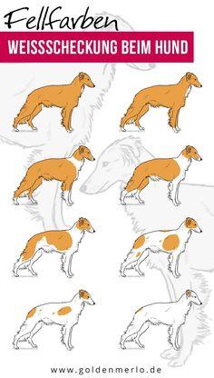 17 best silken windsprite farbenvielfalt images on pinterest doggies dogs and little dogs. Black Bedroom Furniture Sets. Home Design Ideas