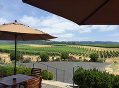 Adelsheim winery tasting room