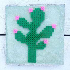 A cactus in my greenhouse Made by sweet Tamara @tamatek and her children who're making 365 perlerbeads in 2015 Green tile is from my grandfather's former bakery ❇️ Har fået den skønneste perleplade fra Holland, så nu har jeg også en kaktus i mit drivhus - en af dem, som sagtens kan tåle at tørre ud #perlerbeads #perleplade #hamabeads