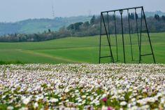 Daisies at Cà Bianca dell'abbadessa # white # nature power #