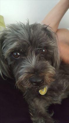 Hunde Foto: Claudia und Maxi - Maxi der Liebling der ganzen Familie Hier Dein Bild hochladen: http://ichliebehunde.com/hund-des-tages  #hund #hunde #hundebild #hundebilder #dog #dogs #dogfun  #dogpic #dogpictures