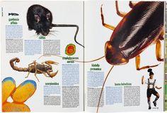 http://www.colorsmagazine.com/images/cache/images/magazine/186/issue14_696_736_500_90.jpg