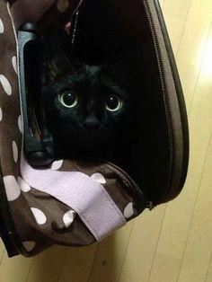 Black cat L o v e ♡