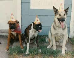 Ideal birthday party