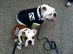 racing numbers Blue and Trip (Butler University mascot and apprentice)