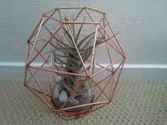 Airplant in hexagon - looks stunning Terrariums, Looking Stunning, Air Plants, Home Decor, Terraria, Terrarium, Interior Design, Home Interior Design, Home Decoration