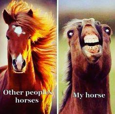 Kira #horse #horses #horsesofinstagram #horseoftheday #instahorse #instagramhorse #instagramhorses #pet #pets #petoftheday #petsofinstagram #instapet #instagrampet #instagrampets #quote #quotes #quotestoliveby #quoteoftheday #instaquotes  #instagramquote #instagramquotes #truth #funny #truthhurts #funnymemes #horsememes #equestrian