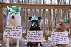 Happy St. Patty's Day!   www.peaceandpaws.org I Love Winter, Winter Time, Paws Rescue, Happy St Patricks Day, My Cousin, Animal Memes, Pet Shop, Twinkle Twinkle, Best Dogs