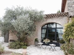 olive trees (2) in front planter area in front of house?