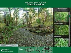 Nature Detectives online game for Muir Woods