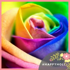 #Soexflora wishes you all a very #Happyholi. May God spray colors of #Success and #Prosperity over you. Have a Joyous #Holi   #Happyholi #Festival #celebration #Rose #Flowergrower #Flowerexporter #Colors  www.soexflora.com