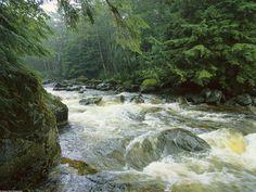 Rushing Salmon Stream, Princess Royal Island, Canada