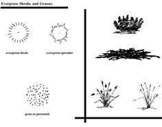 Evergreen Shrubs and Grasses What Is Landscape Architecture, Landscape Concept, Architecture Drawings, Landscape Lighting, Landscape Design, Architecture Plan, Garden Design, Flat Drawings, Elevation Drawing