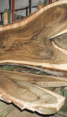 Excellent quality, American Black Walnut log. If you are looking for character, figure and beautiful color then this is the log for you! All slabs show a very heavy tiger figure throughout, along with beautiful wild grain! ~ Hearne Hardwoods Inc.